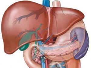 118 Влияние алкоголя на органы человека